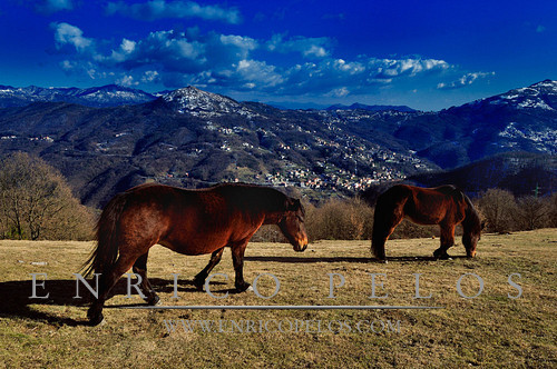 Cavalli sul Monte Capenardo e panorama su Traso e S Alberto e la strada per Torriglia, la Val Trebbia e Piacenza