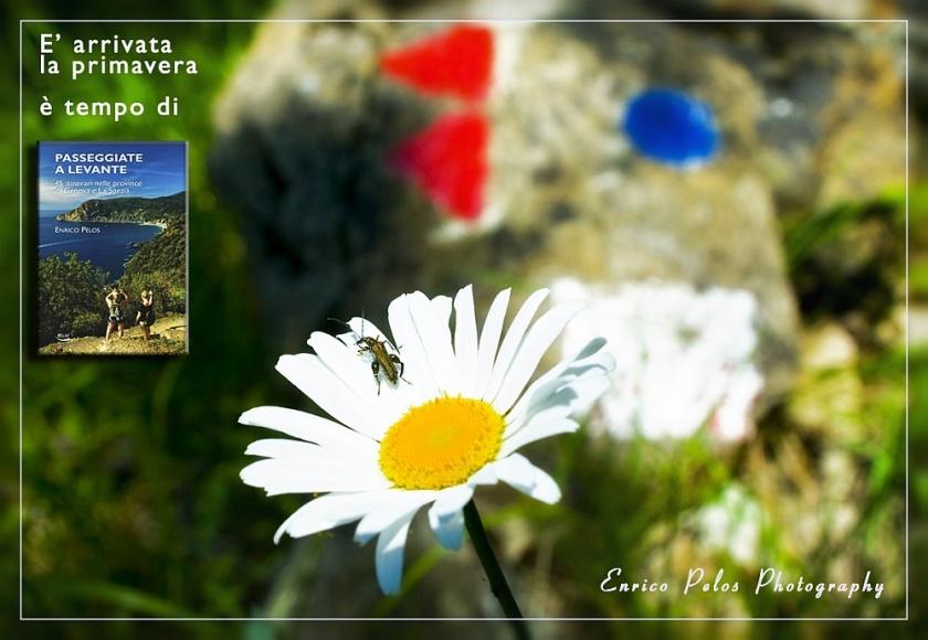 E' arrivata la primavera ... è tempo di passeggiate ed escursioni... Spring is here... it is time to go walking, hiking, trekking...